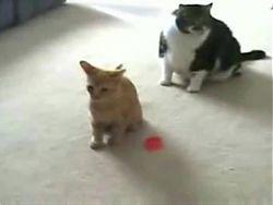 Cat Vs Laser Pointer!